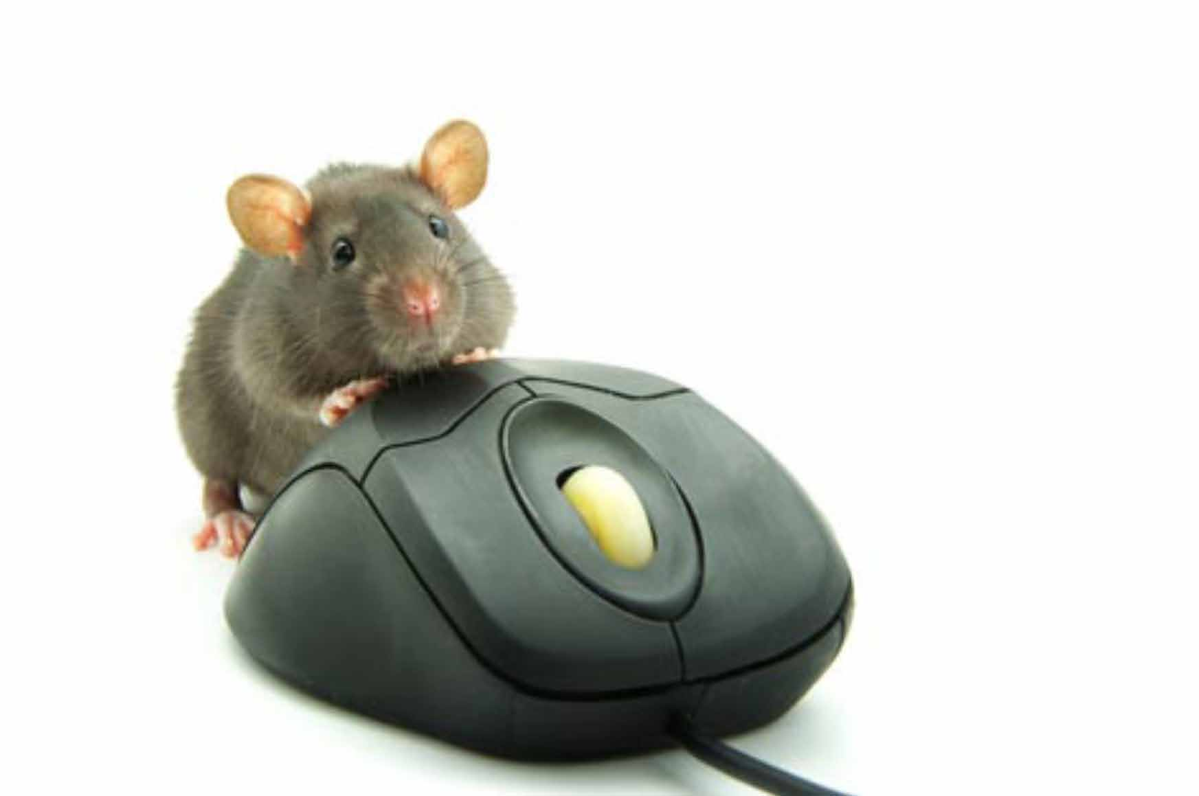 Your computer mouse knows when you're lying